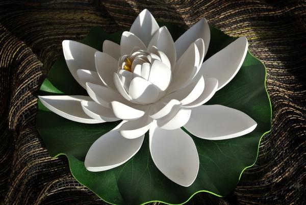 Lotusblüte auf Blatt, groß
