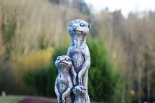 Erdmännchenfamilie