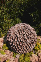 Blüte Dahlia
