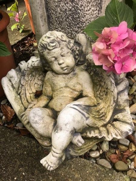Engel in Muschel schlafend