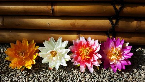 Lotusblüten in verschiedenen Farben