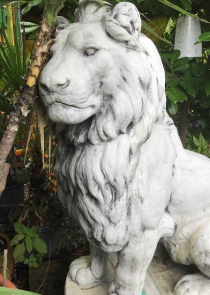 Großer Löwe - 136cm