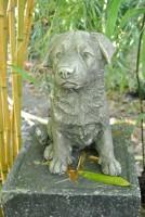 Rottweiler Welpe