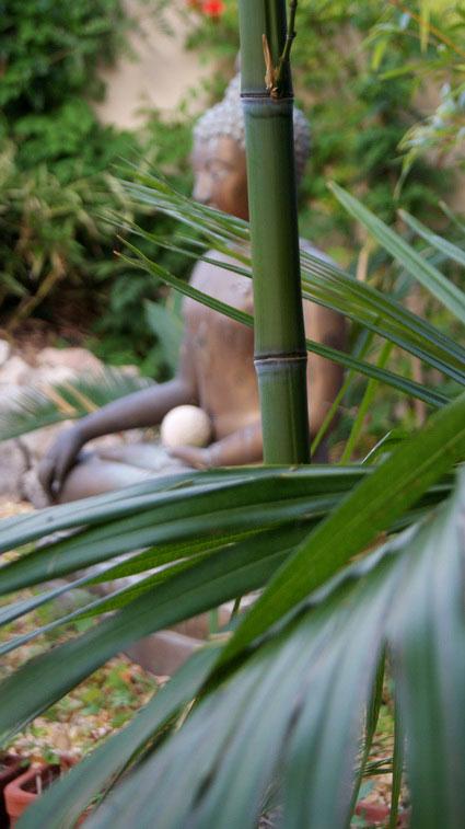 phyllostachys-aurea-hysp-bambuswald-650e58c45e70c2