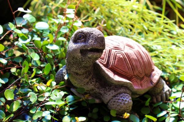 Schildkröte - Blick nach links