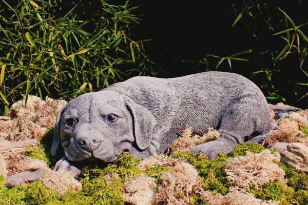 Liegender Labrador