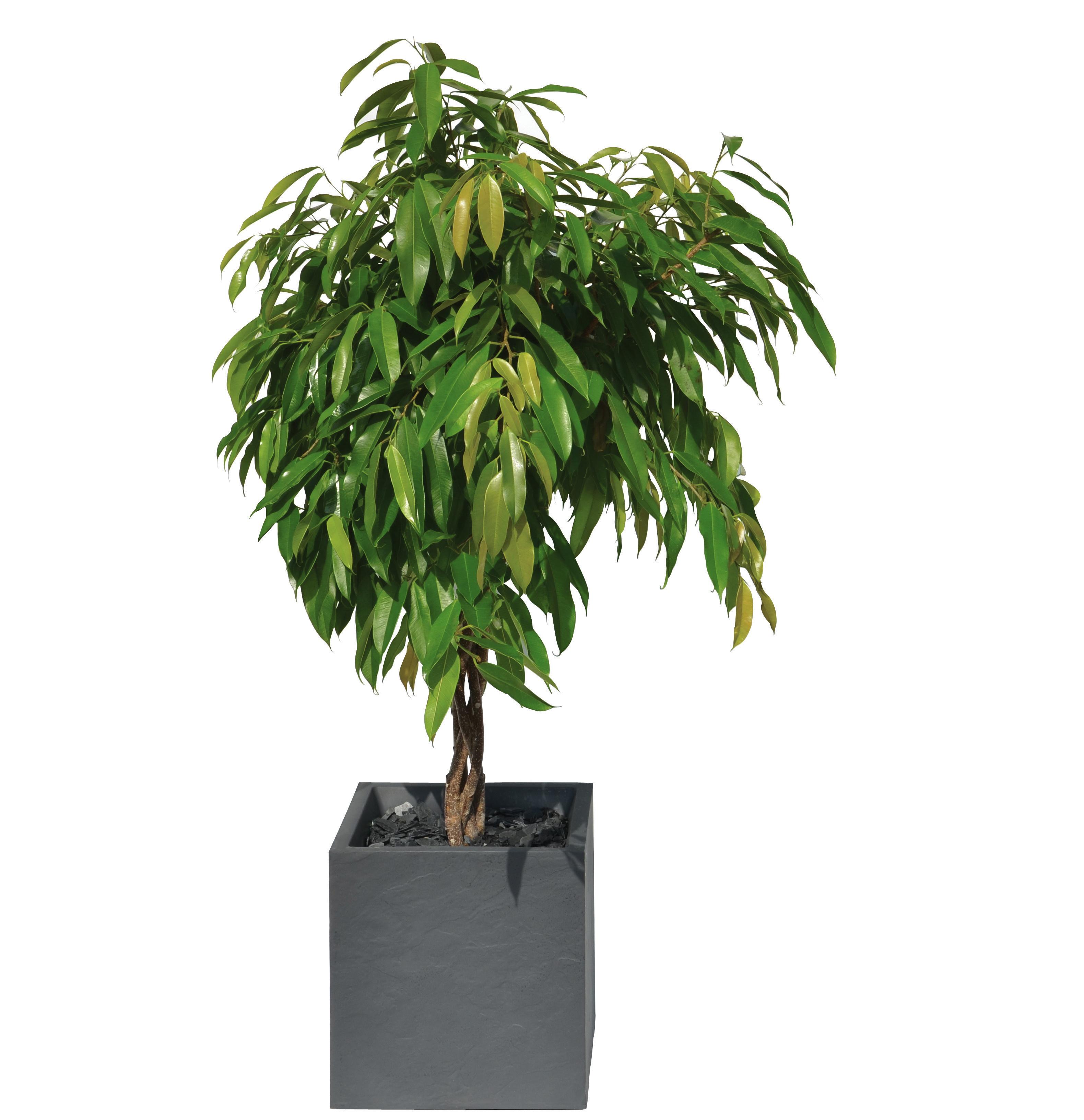 T pfe und pflanzgef sse f r garten und terassenpflanzen for Asiatische deko garten
