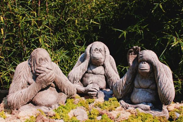 Affen - nicht hörend, nicht sehend, nicht sprechend