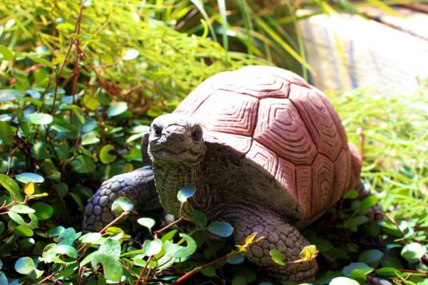 Schildkröte mittelgroß - Blick hochgerichtet