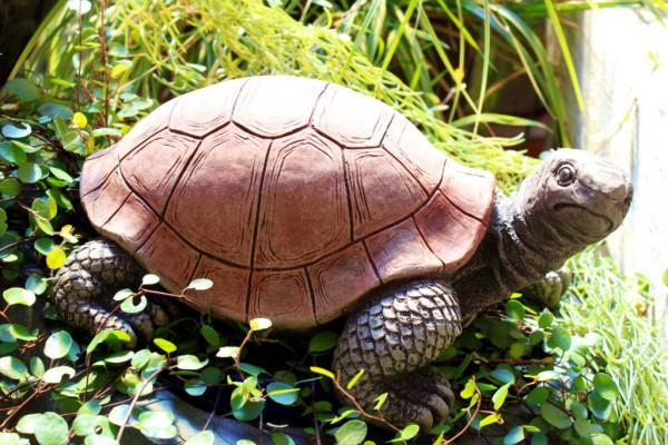 Schildkröte groß - Blick nach rechts