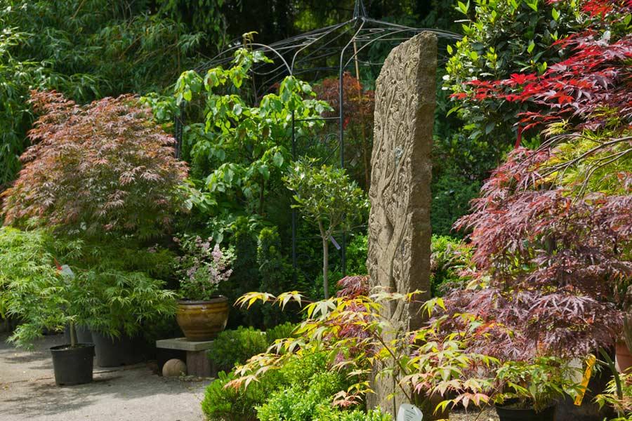 stefansoell-bambuswald_15538b737c456af